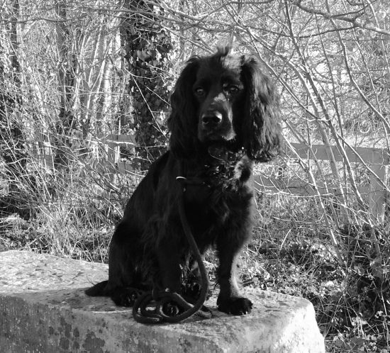 Black and white photo of Sid the dog