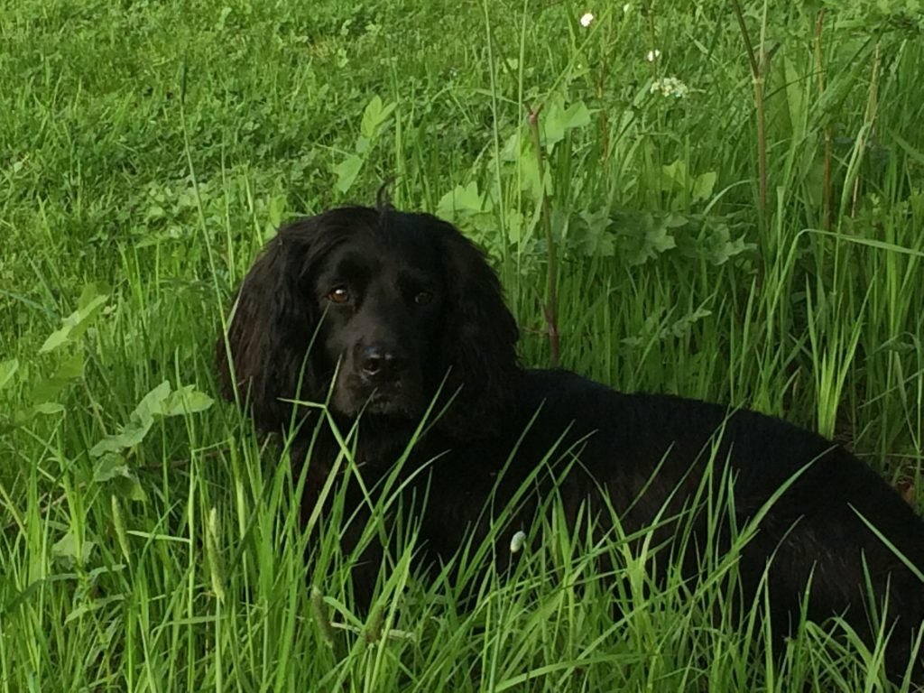 Sid the Dog in the long grass