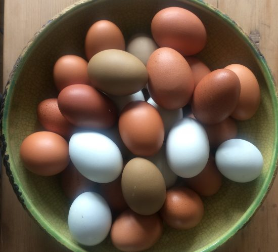 a bowl of eggs freshly laid at the hen house